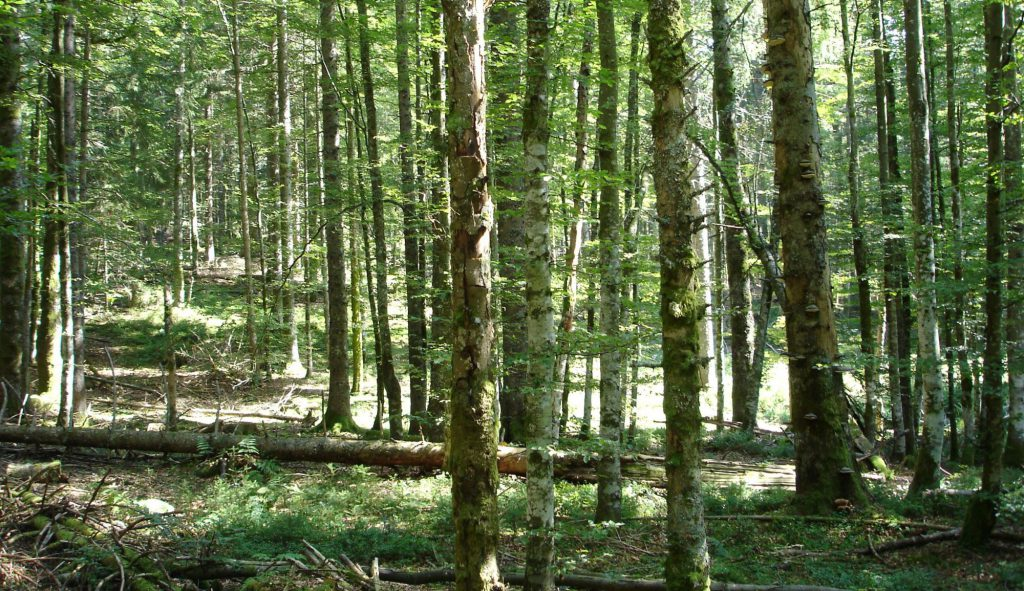 Wald 4.0, Innovationen, Forst, Wald, Umwelt